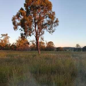 Lowood Nature Camp