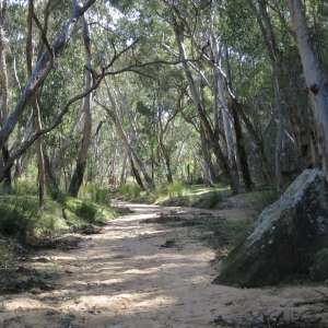 Pilliga National Park