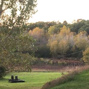 Three Acre Woods