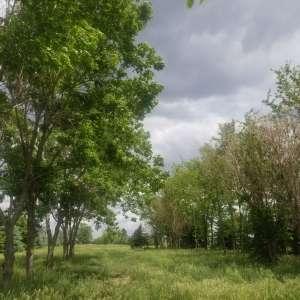 Forrest  C.'s Land