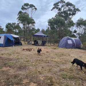Little Pigs Bush Camp Heathcote