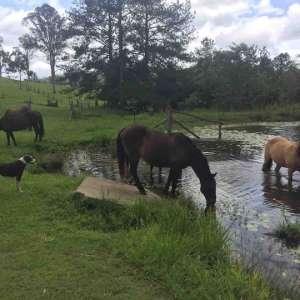 GG's Ranch & Retreat