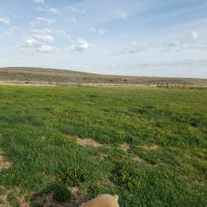 High Desert Pasture