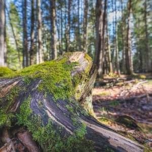 Mactaquac Provincial Park