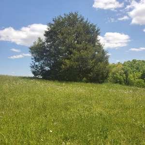 Bridgett T.'s Land