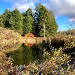Cascadilla Meadow