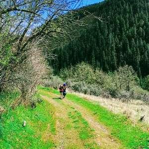 Trillium Wilderness Community
