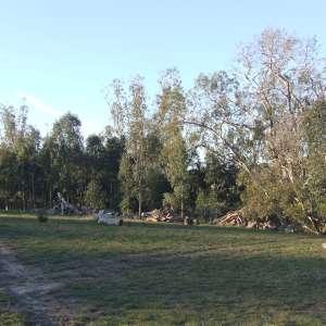 Gum Tree Valley