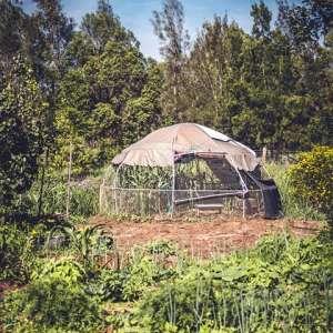 Purple Pear Farm Camping