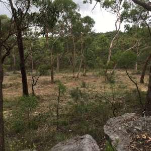 Jarrah Camping Area