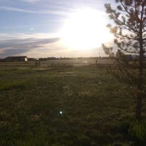 Dana M.'s Land