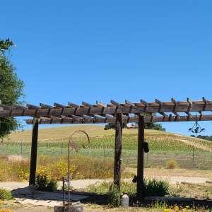 Roblar Paso Oaks and Vines
