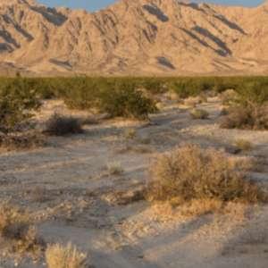 Wonder Valley Mining Camp