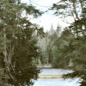 Aurelda E.'s Land