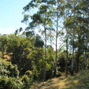 Ranges and Ferns