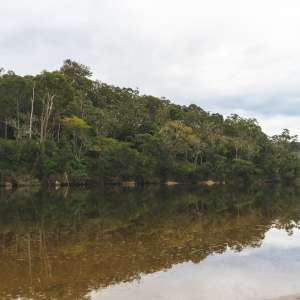 Nest on the Shoalhaven River