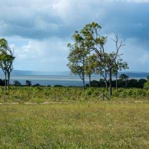 Fraser Island view Virtue Farm