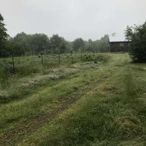 Niki C.'s Land