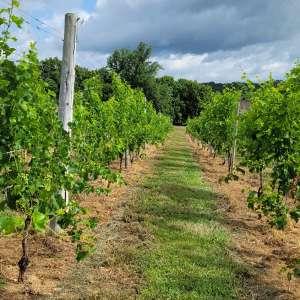 Goodwater Vineyards