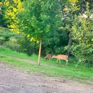 Deer Camp Cabin