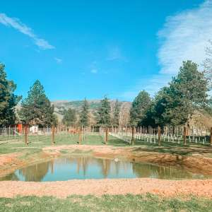 The Vine Cabin @ Barrel Creek Farm