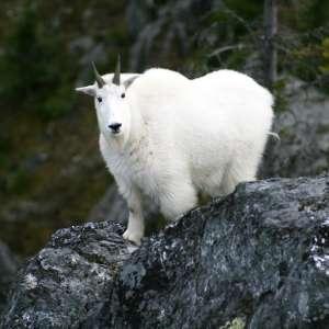 Babine Mountains Provincial Park