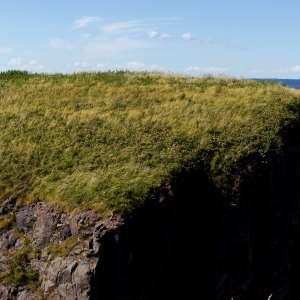 Cape Split Provincial Park