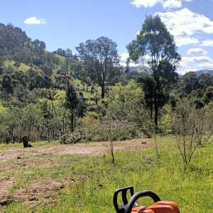 Bluegum Valley