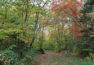 Our woods, a nice place for a peaceful walk