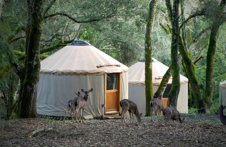 Lupin Lodge S Land Camping