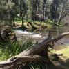 Rapids, Wombat Riverside