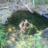 Springvale Eco Park - 2 people max