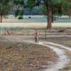 Resting Goanna Campground - Barkala