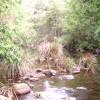 Kookaburra Hills Bush Turkey Site 6