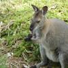 Kookaburra Hills Wallaby Site 4