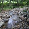 Kookaburra Hills Goanna Site 5