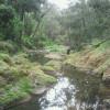 Wombat Glen