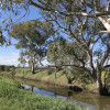 Warrego River camp (unpowered)