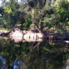 Gold Coast River Camping - 1brm