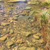 Creek Boundary