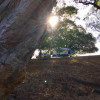 Figtree Camp #1