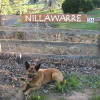 Nillawarre Middle Camp