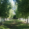 Royal Oaks Unpowered Campsites