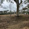 Ghost Gums at Bungonia Bush Camp