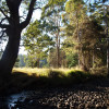 River campsite - Stringybark