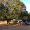Figtree Camp #2