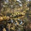 Jindalee River Camp Site 1