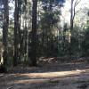 Loggers Landing - site 2