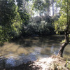 Bowhill - Creek side