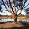 Mirrengatta, Clunes, Vic Camping 2